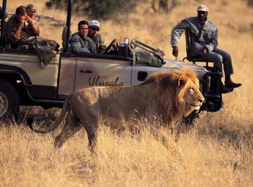 South Beach Hotels >> Photographic Safaris at Ulusaba Private Game Reserve
