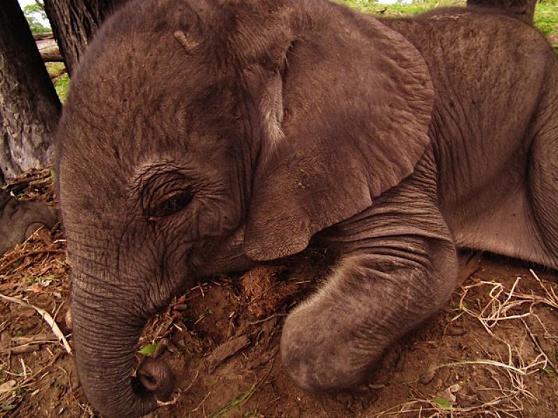 Warona resting