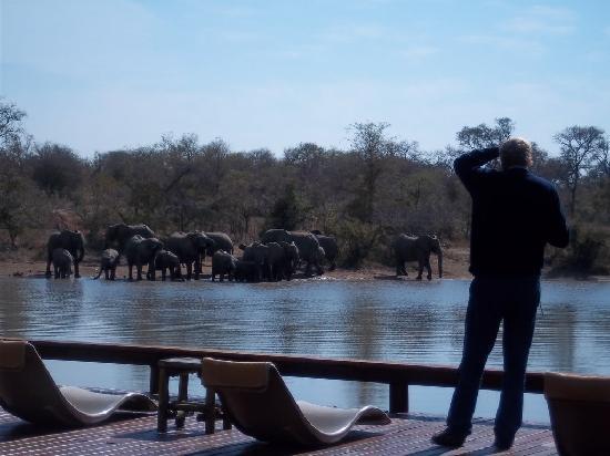 Elephants in Gomo Gomo Game Lodge