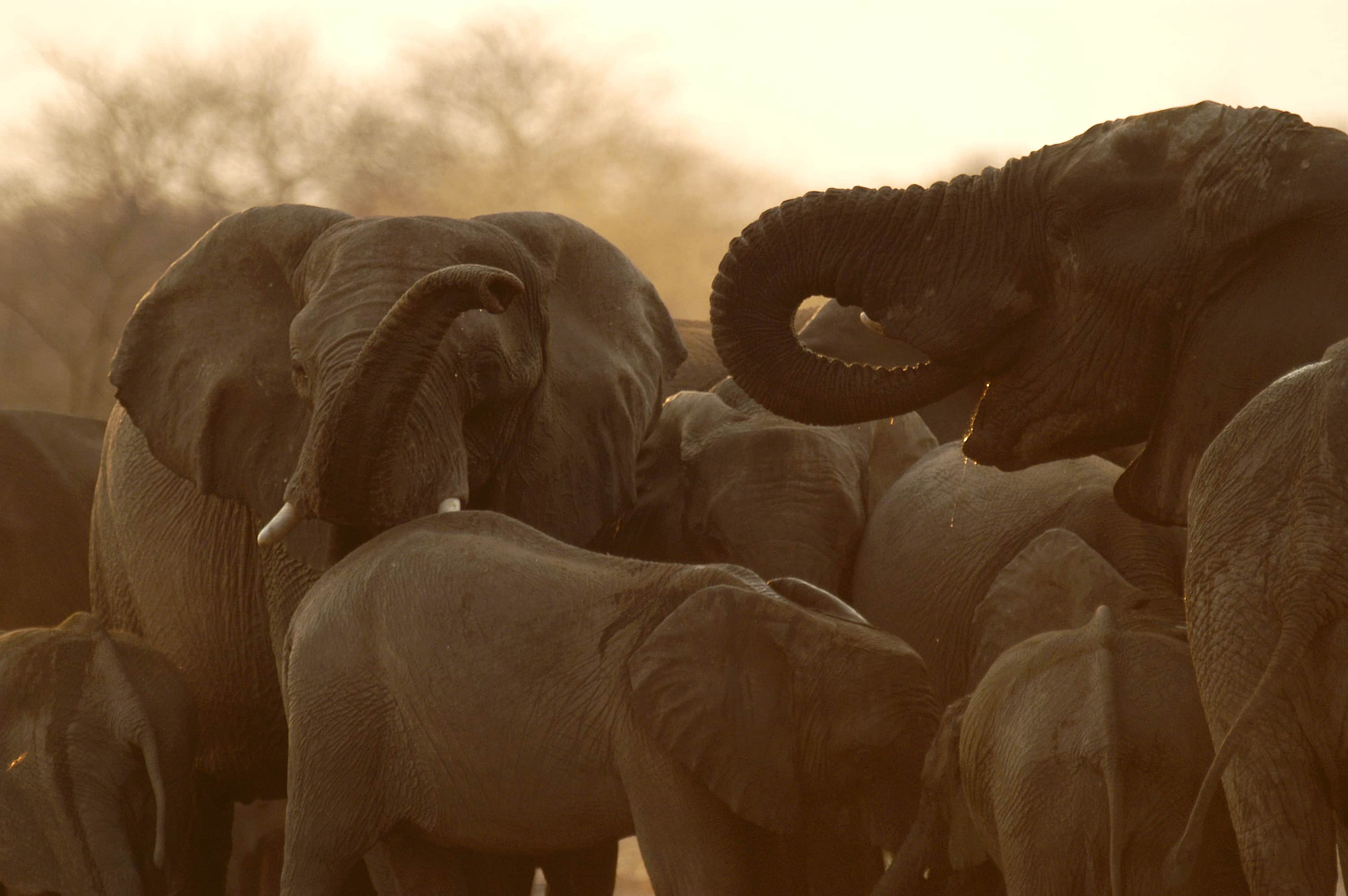 Elephants bunching at a water hole.