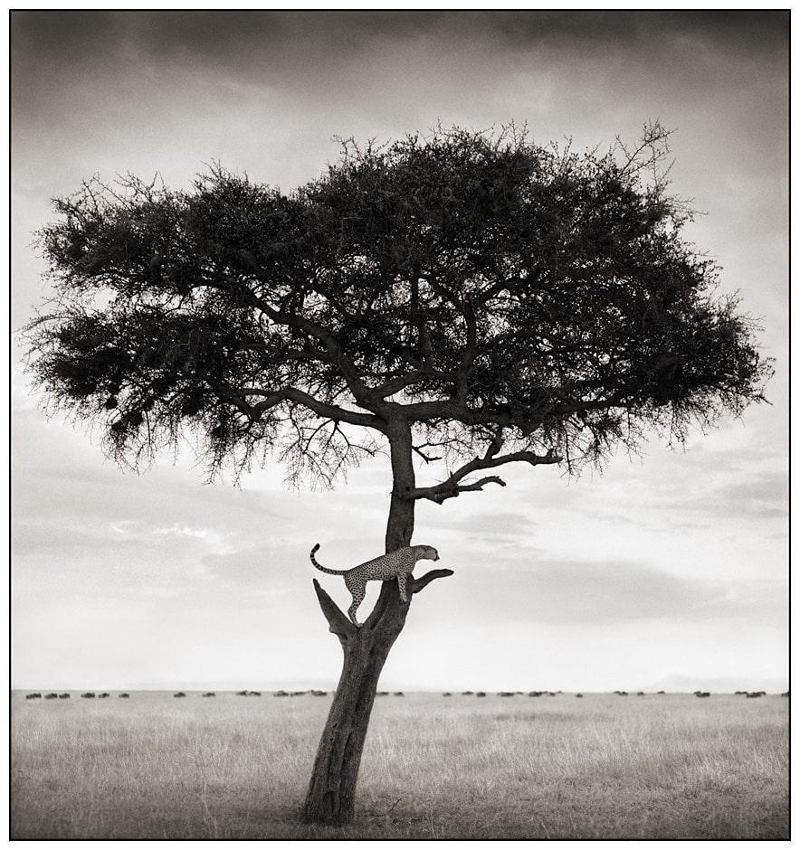 nickbrandt-tree