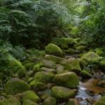 Mount Gorongosa Rainforest