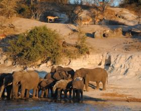 chobe national park_600x350