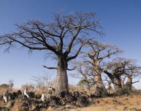 &Beyond Botswana