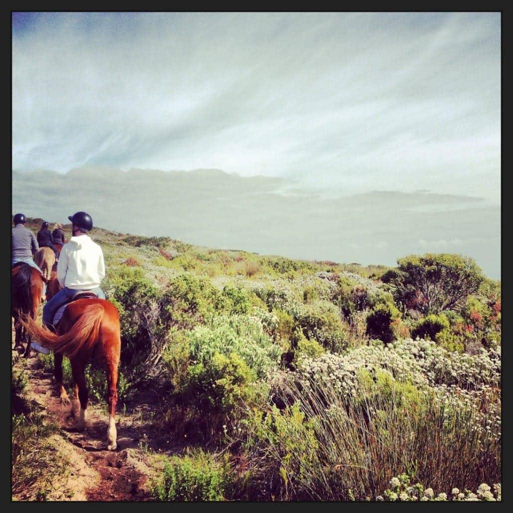 horses_grootbos