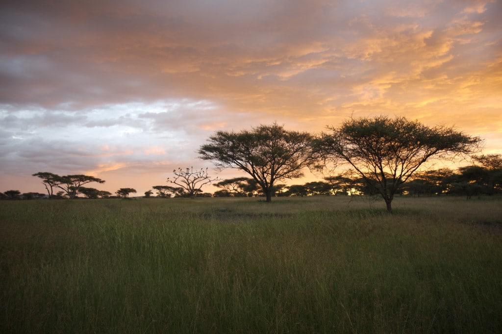 Serengeti-Sunset-tanzania