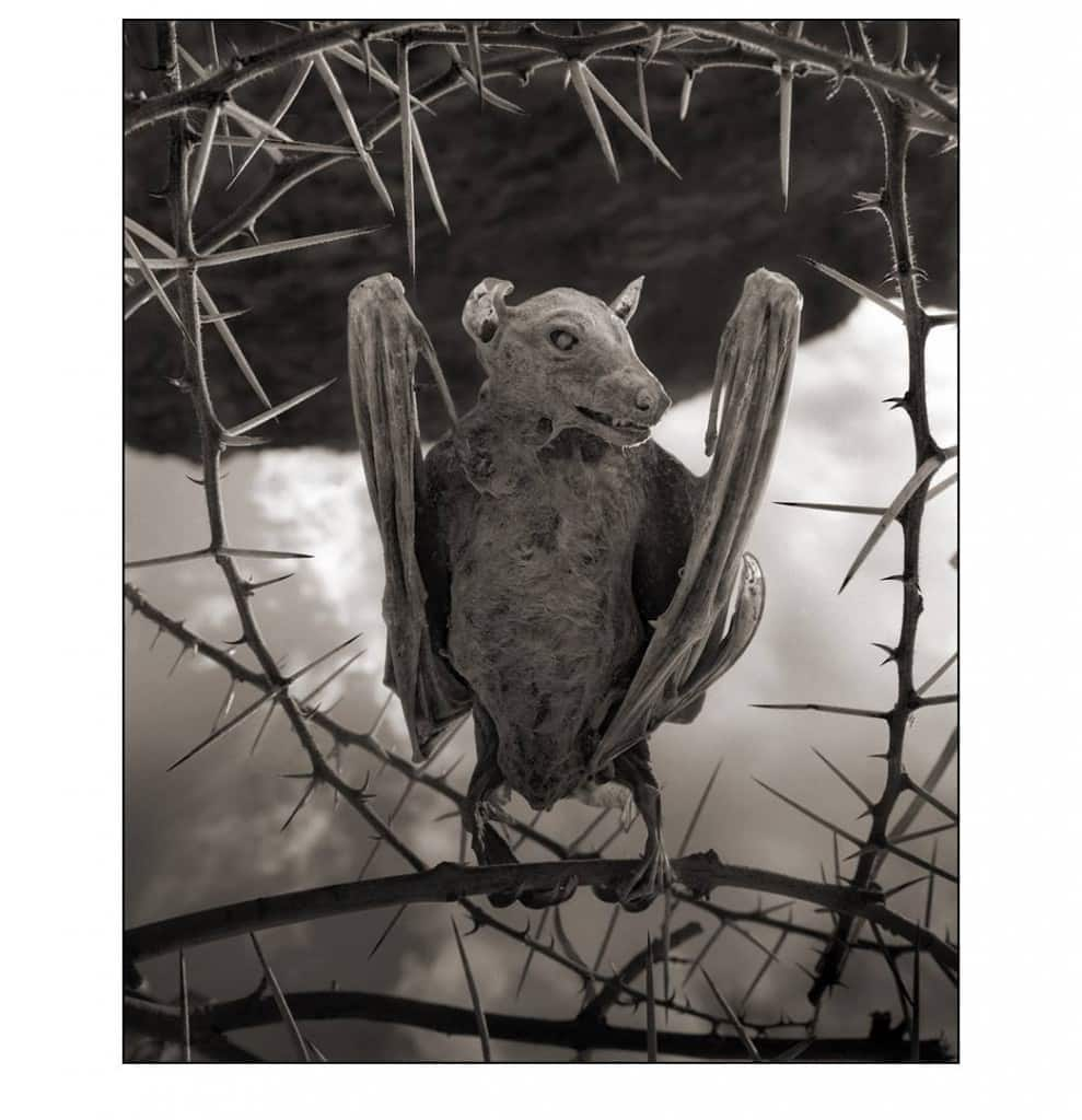 Calcified Bat © Nick Brandt 2012