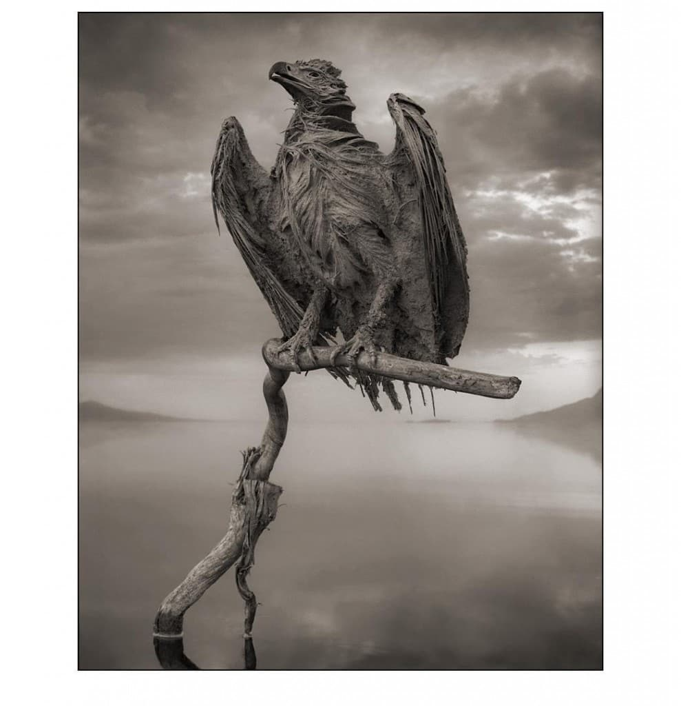 Calcified Fish Eagle © Nick Brandt 2012