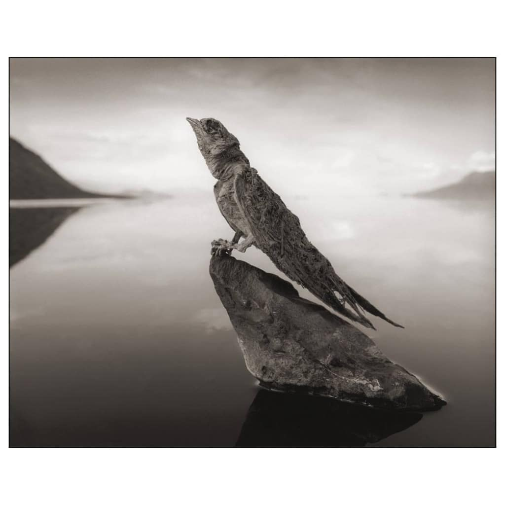 Calcified Swallow © Nick Brandt 2012