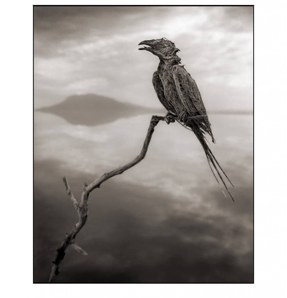 Calcified Songbird © Nick Brandt 2012