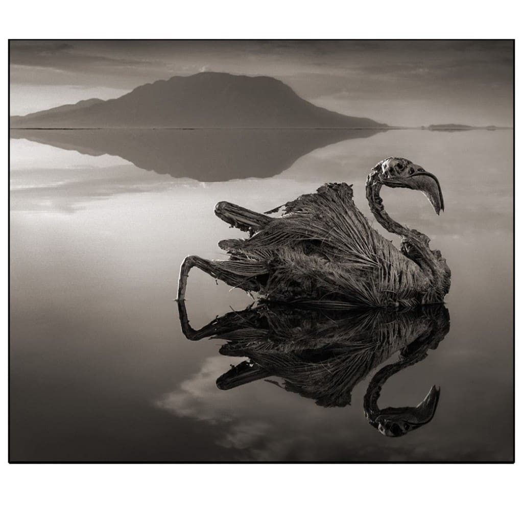 Calcified Flamingo © Nick Brandt 2012