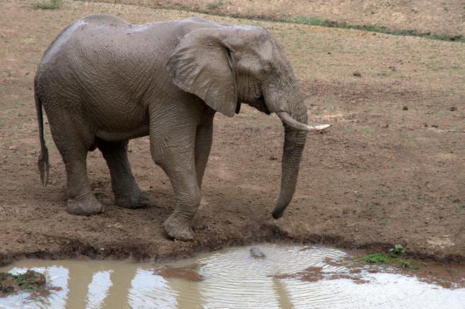 ian_salisbury_elephant_zambia_1