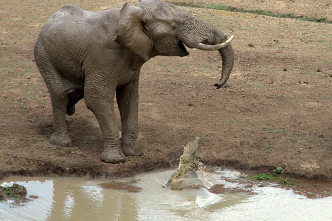 ian_salisbury_elephant_zambia_5
