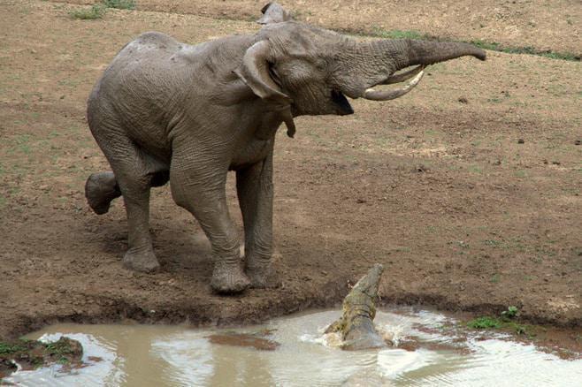 ian_salisbury_elephant_zambia_6