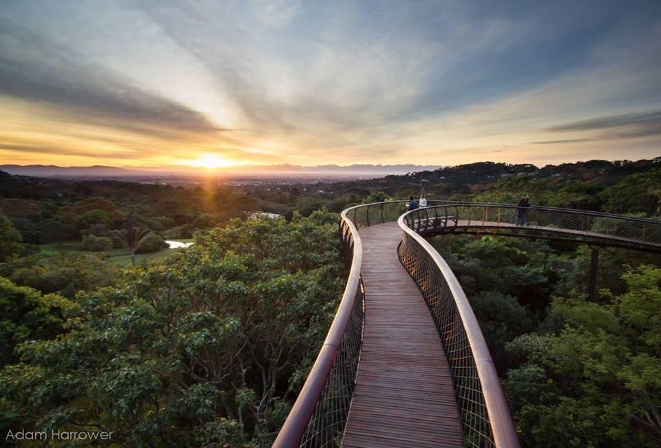 Kirstenbosch Canopy Walkway view