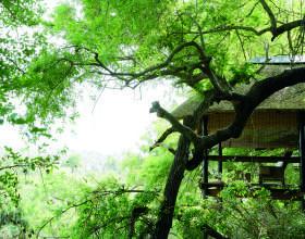 Tree-camp-sala-280x220