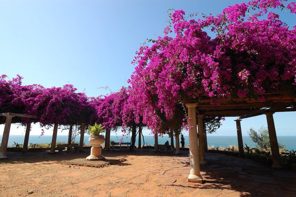 Flowered_Maputo