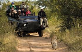 lion sands safari