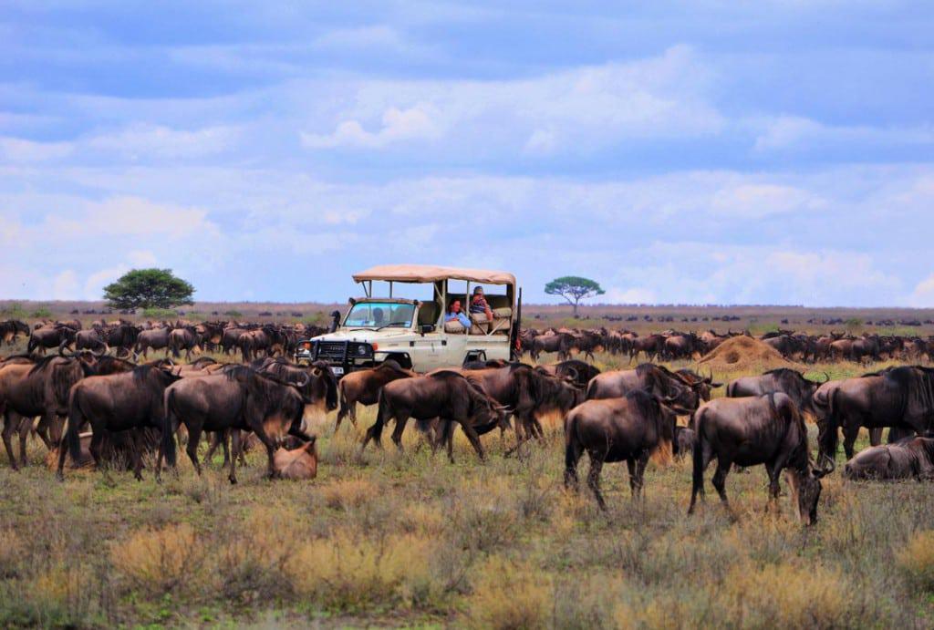 Serengeti_game_drive