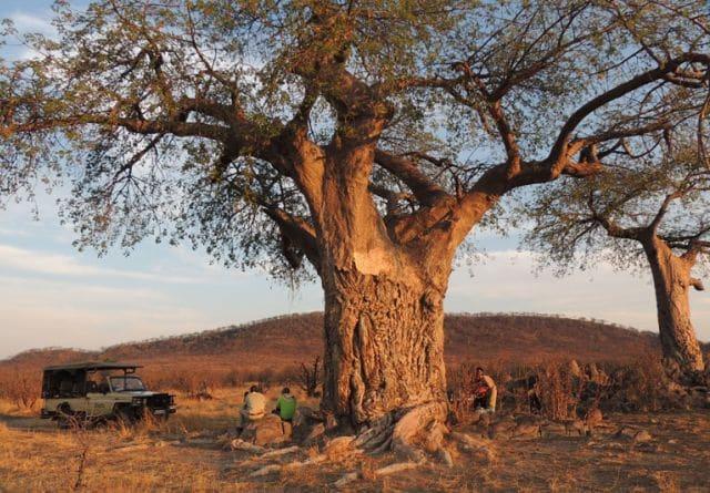 Ghoha Hills baobab