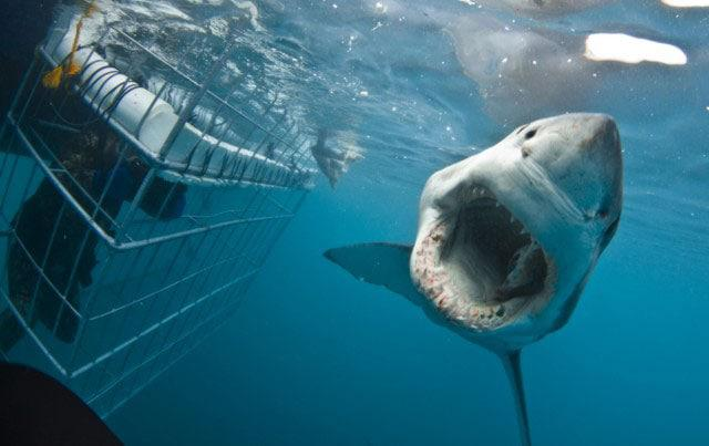 Cape-Town-Shark-Cage-Diving