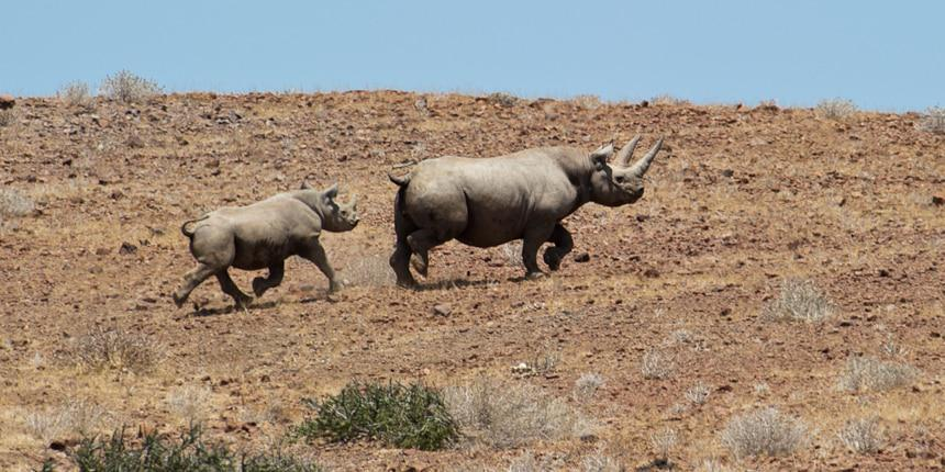 Rhino-Tracking Damaraland