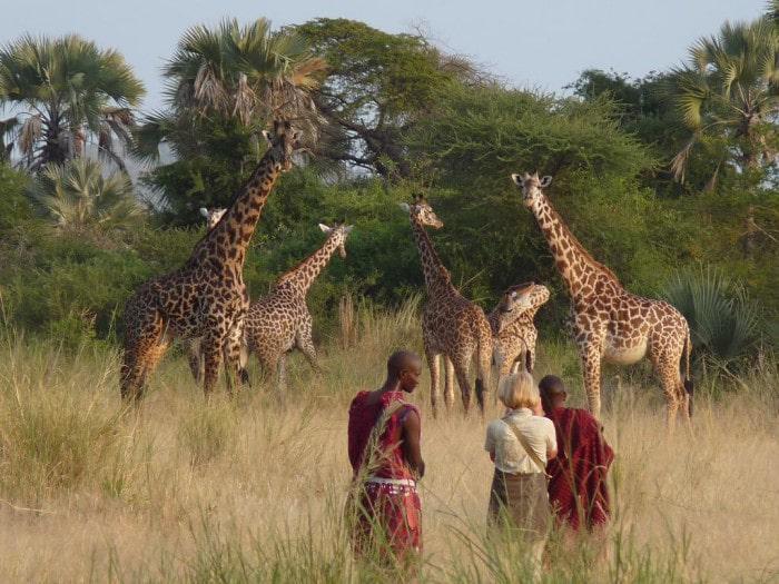 Chem Chem giraffes