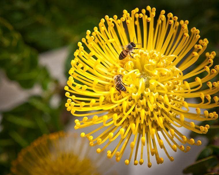 Bartinney-Biodiversity-gallery-4