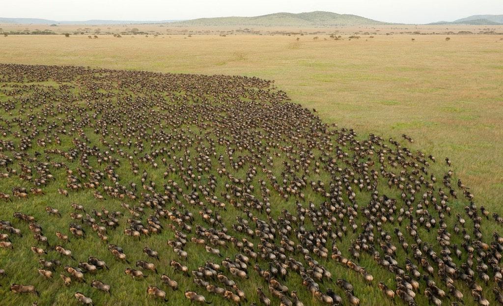 The Masai Mara from above