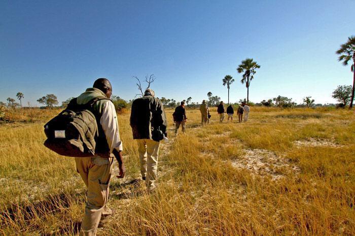 Walking safari through Okavango Delta
