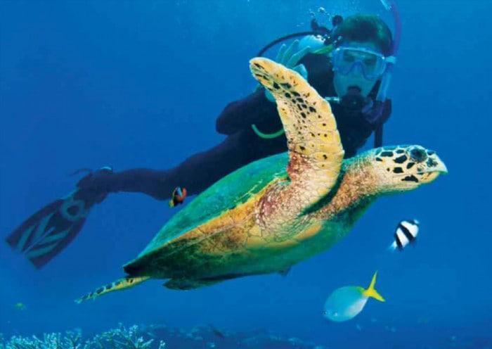 Vamizi Island Scuba Diving
