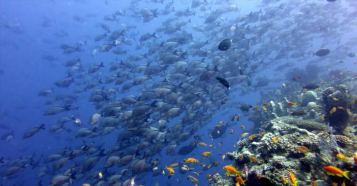 Vamizi Island Scuba Diving2
