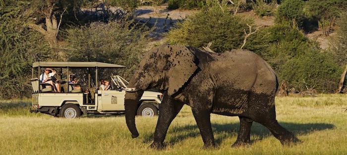 family safaris botswana elephant