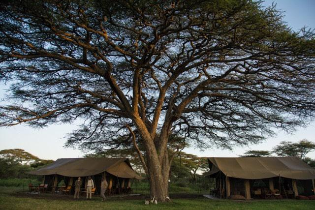 Kimondo camp set amongst stunning Acacia woodland in the southern Serengeti. Our favourite camp, simple and situated in the path of the great migration