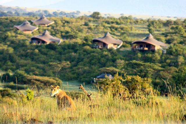Lioness with Mahali Mzuri in the background