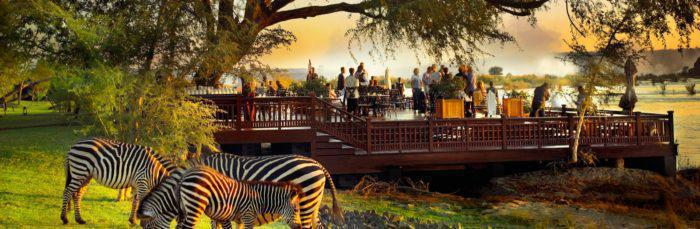 Zebrasgrazing Royal Livingstone Zambia