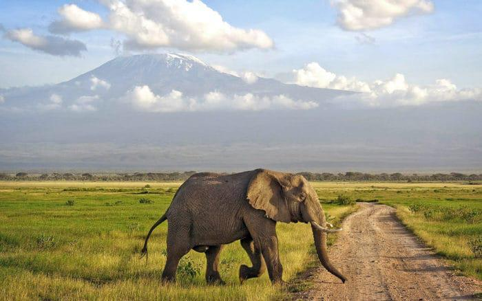 Kenya Travel Advice: What You Need to Know Before You Go