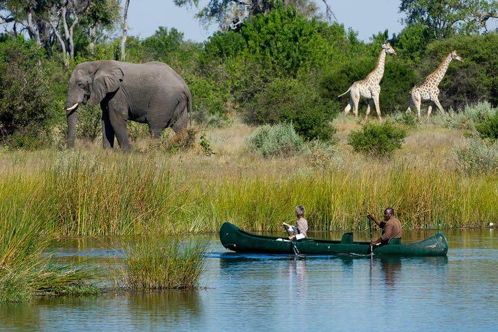 canoeing okavango delta elephant giraffe botswana
