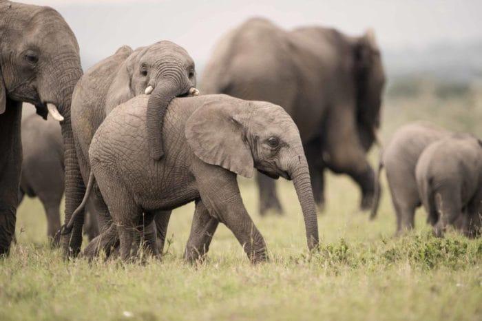 Baby ellies at Singita Tanzania