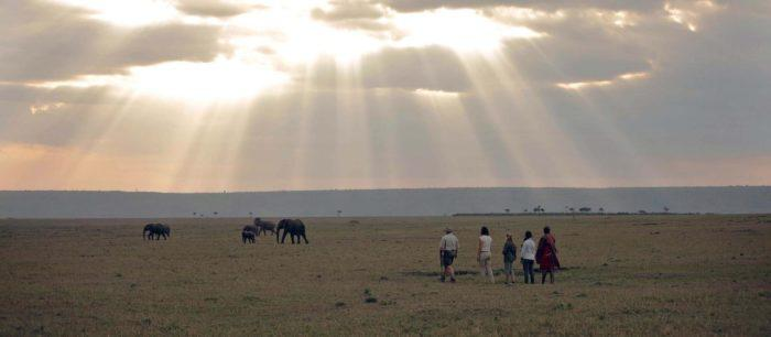 Bush walk at Elephant Pepper Camp