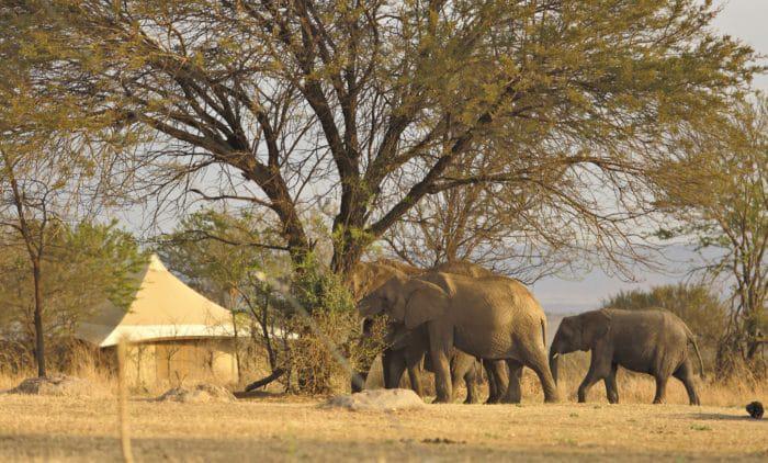 Sayari Camp with elephants