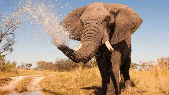 Elephant spraying water Kwaih Concession Natural Selection Skybeds