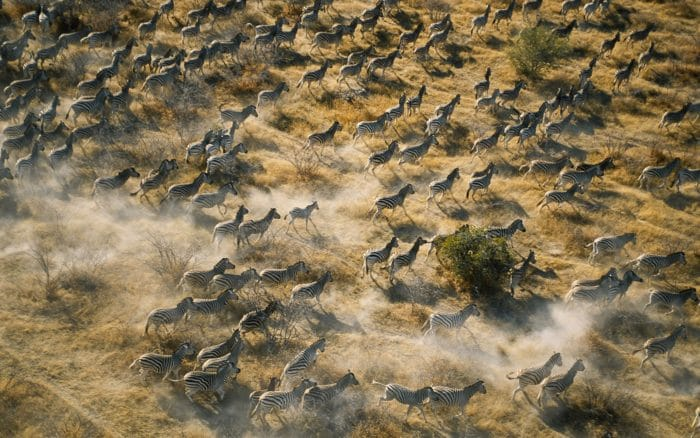 Mena o Kwena zebra Migration picture credit and copyright Rough Guides Limited