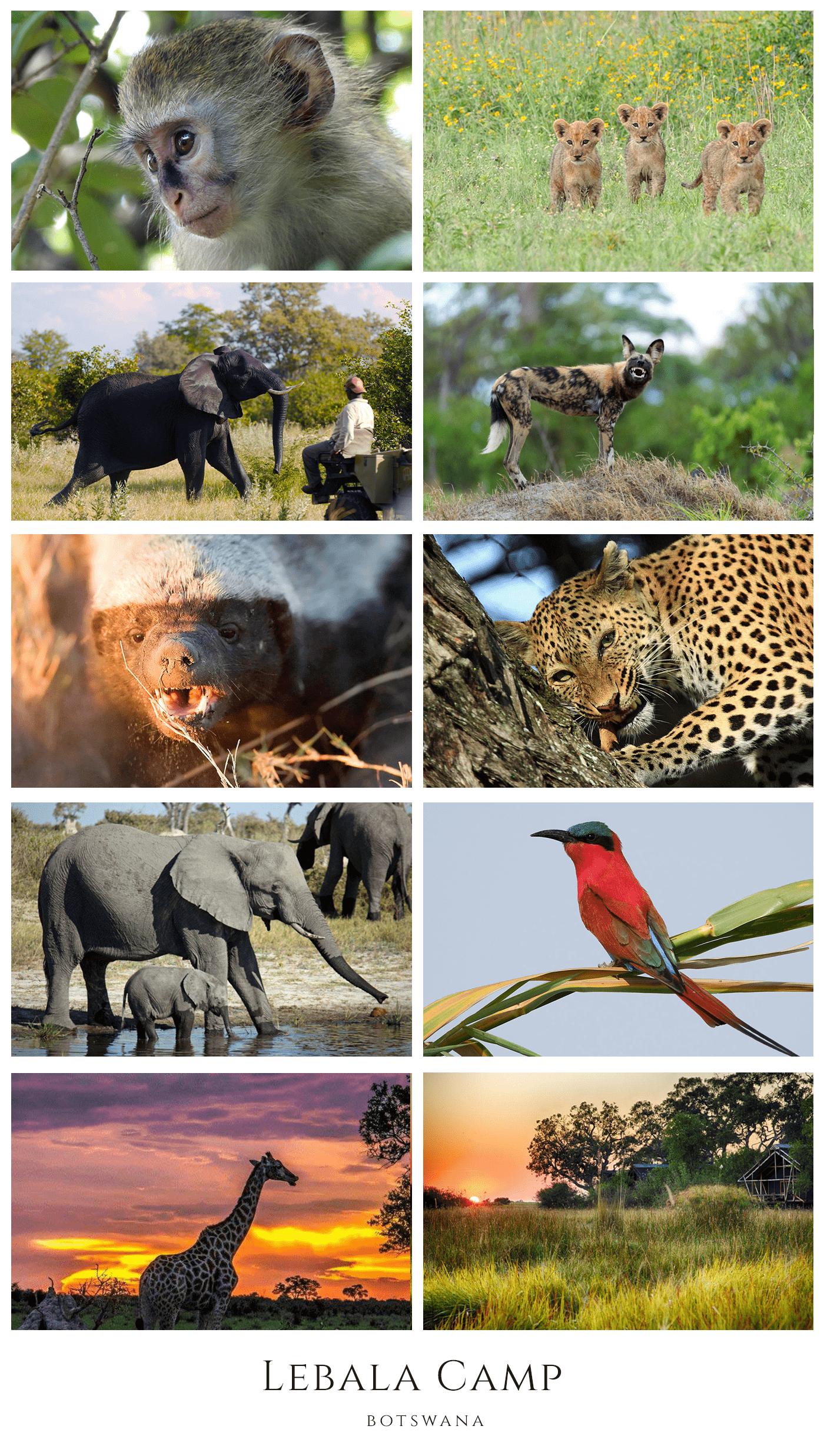 Green season in Botswana at Kwando Lebala Camp - African Safari Consultants