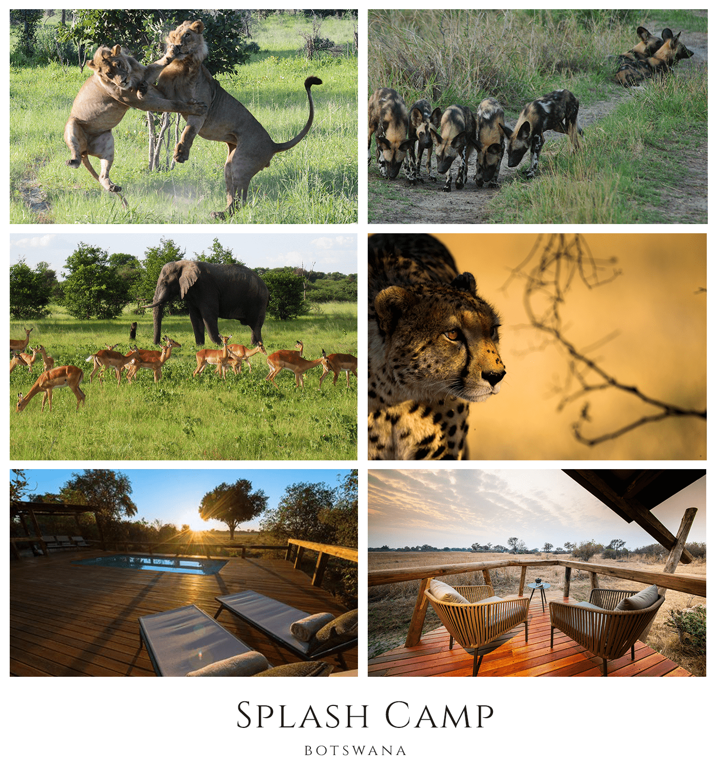 Lions, wild dogs, elephants and cheetahs at Kwando Splash Camp in Botswana
