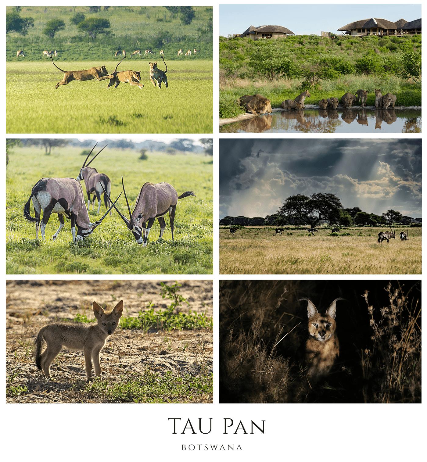 Green season in Botswana at Tau Pan with African Safari Consultants