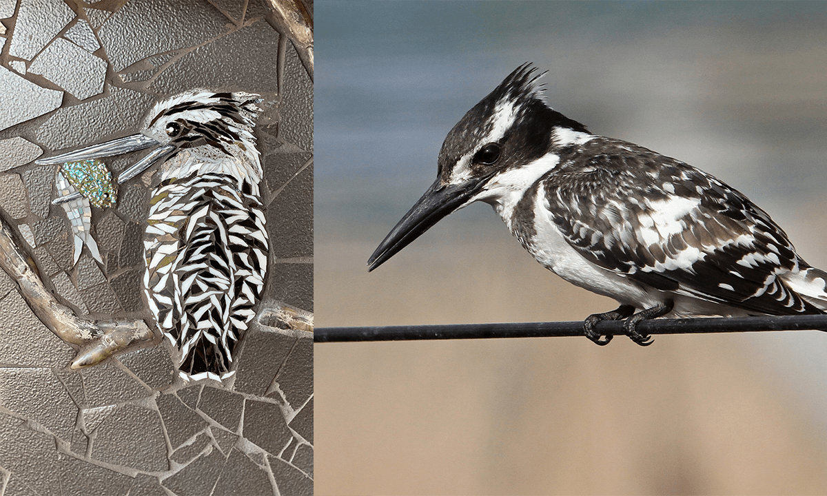 Sarah Pryke captured the pied kingfisher's pattern and coloring to perfection! Did you know that it is the only black and white kingfisher in the world? Another interesting fact is that they are the largest of Africa's hovering birds - and can swallow their meal in mid-flight.