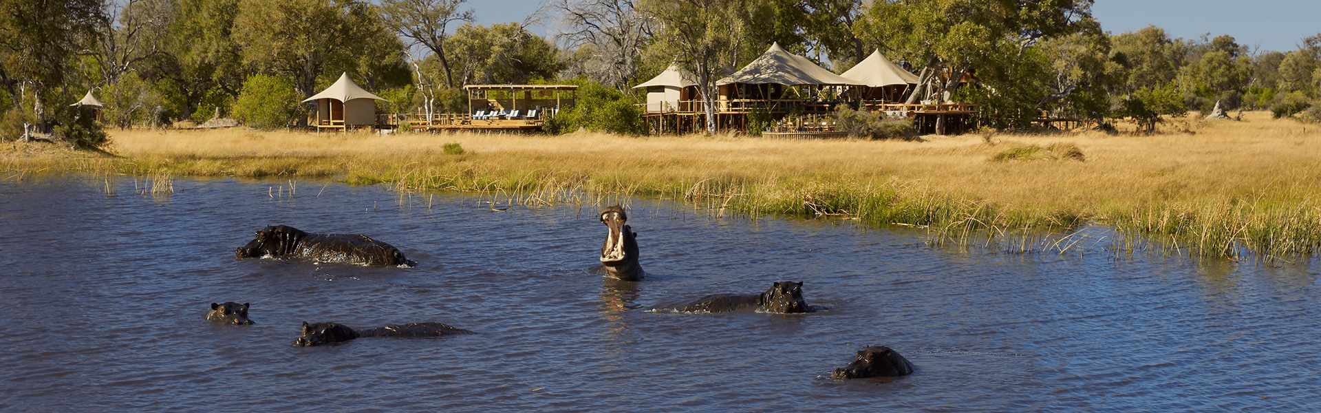 Tuludi's tree-house styled tents with resident hippo pod in the lagoon